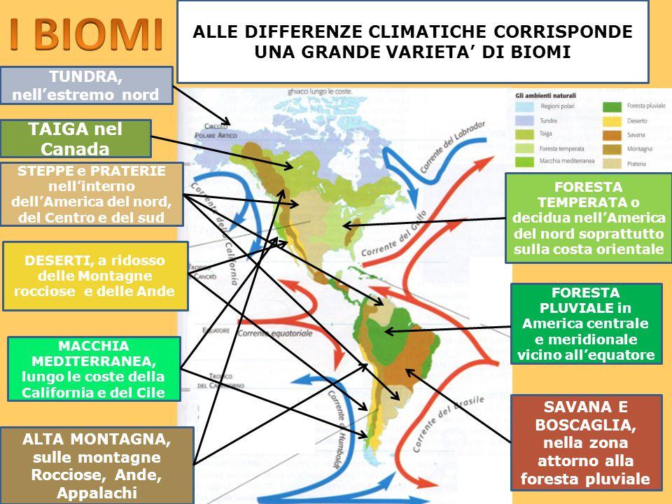 I BIOMI ALLE DIFFERENZE CLIMATICHE CORRISPONDE UNA GRANDE VARIETA' DI BIOMI. TUNDRA, nell'estremo nord.