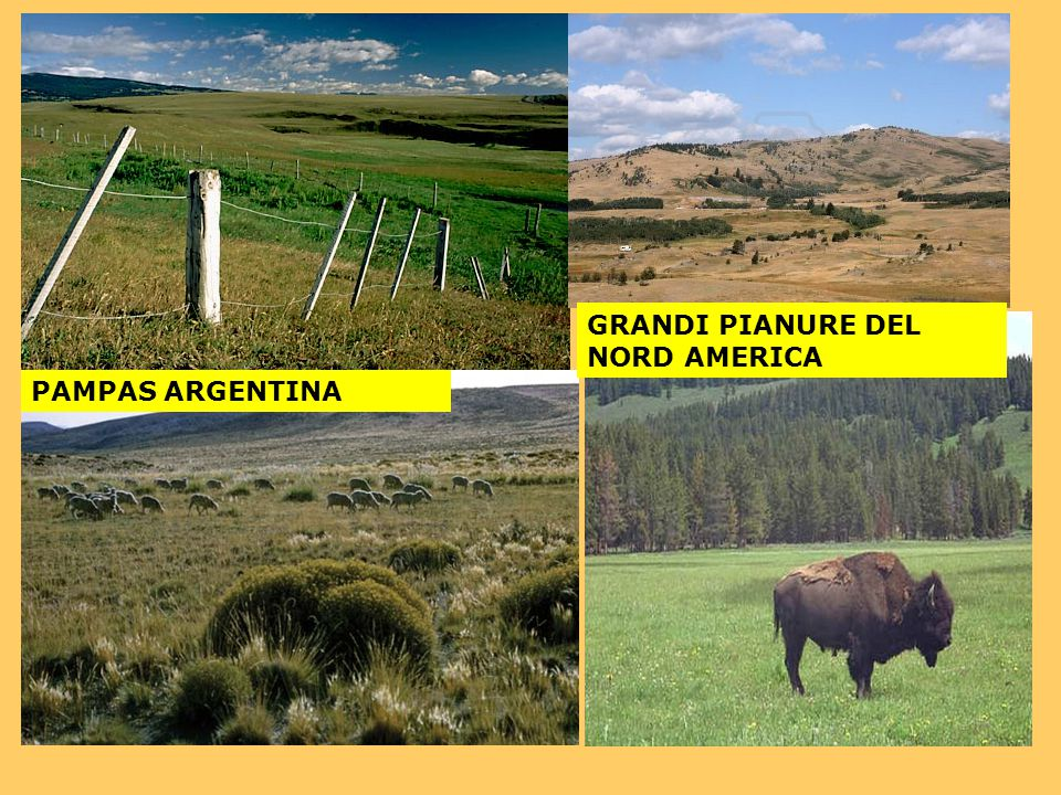 GRANDI PIANURE DEL NORD AMERICA