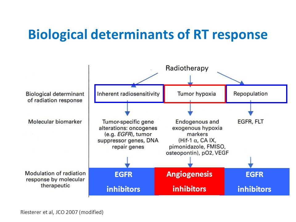 Biological determinants of RT response