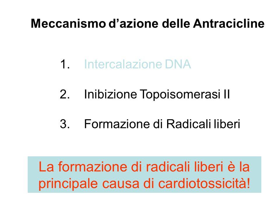 Meccanismo d'azione delle Antracicline