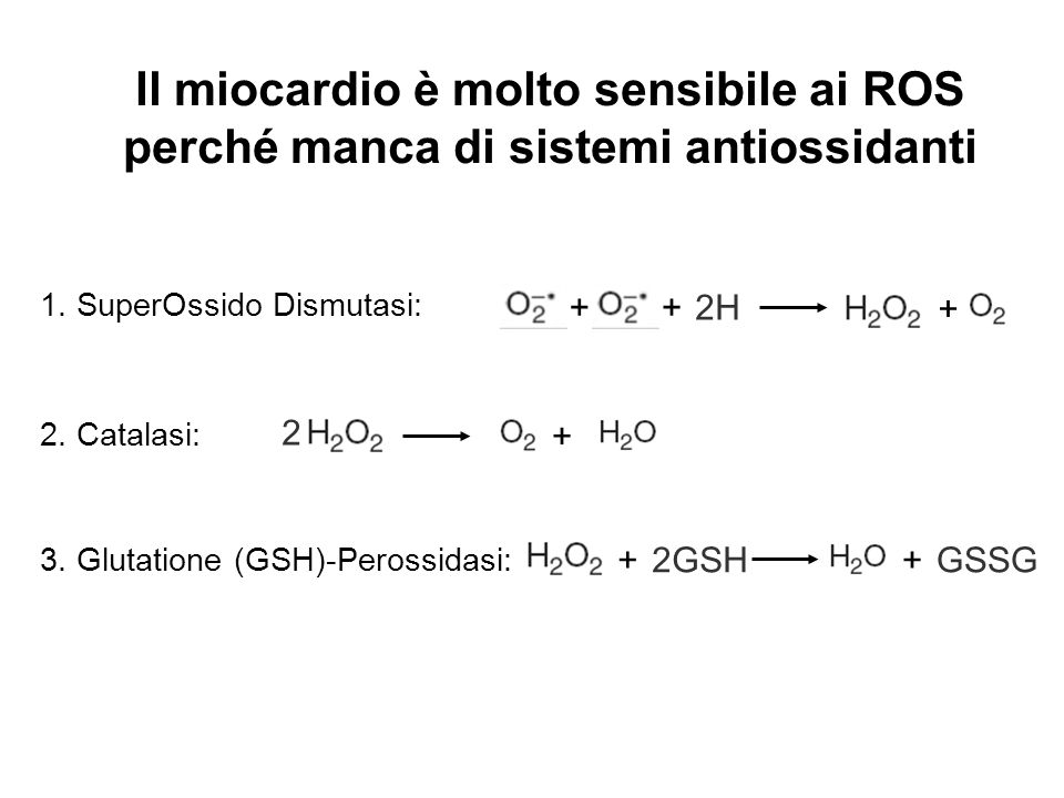 Il miocardio è molto sensibile ai ROS perché manca di sistemi antiossidanti