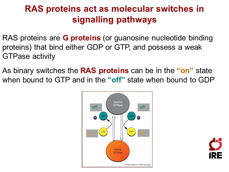 RAS proteins act as molecular switches in