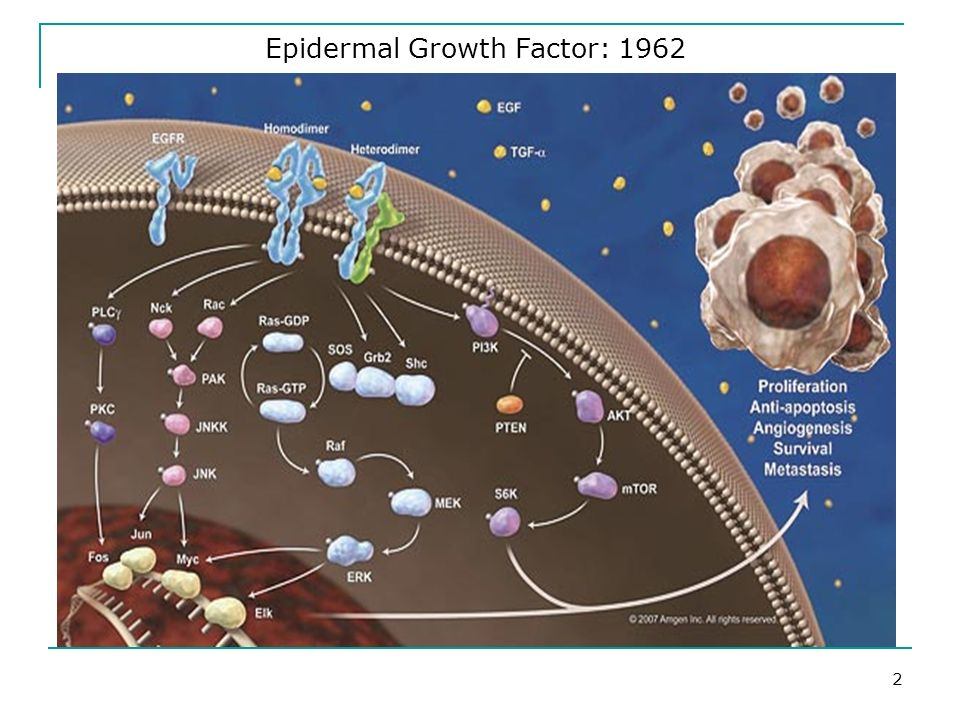 Epidermal Growth Factor: 1962