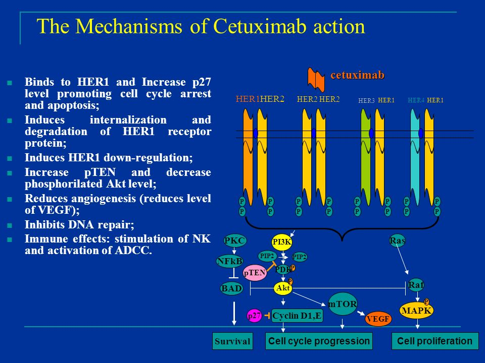 The Mechanisms of Cetuximab action