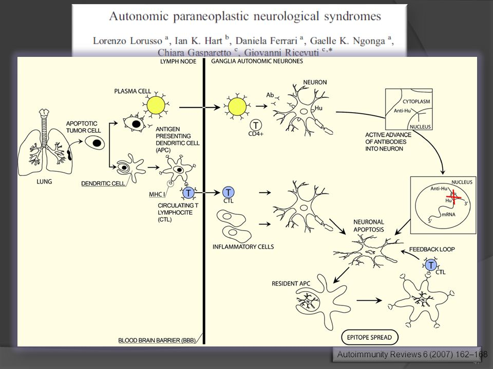 autonomic paraneoplastic neurological Hu-related syndromes