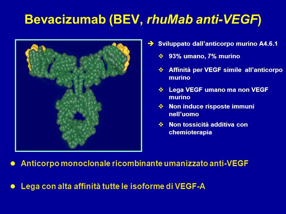 Bevacizumab (BEV, rhuMab anti-VEGF)