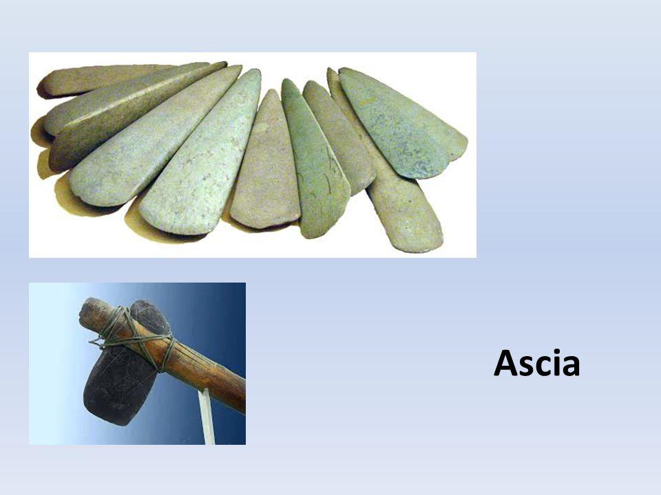 Ascia