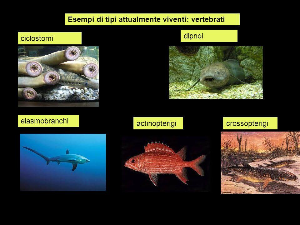 Esempi di tipi attualmente viventi: vertebrati