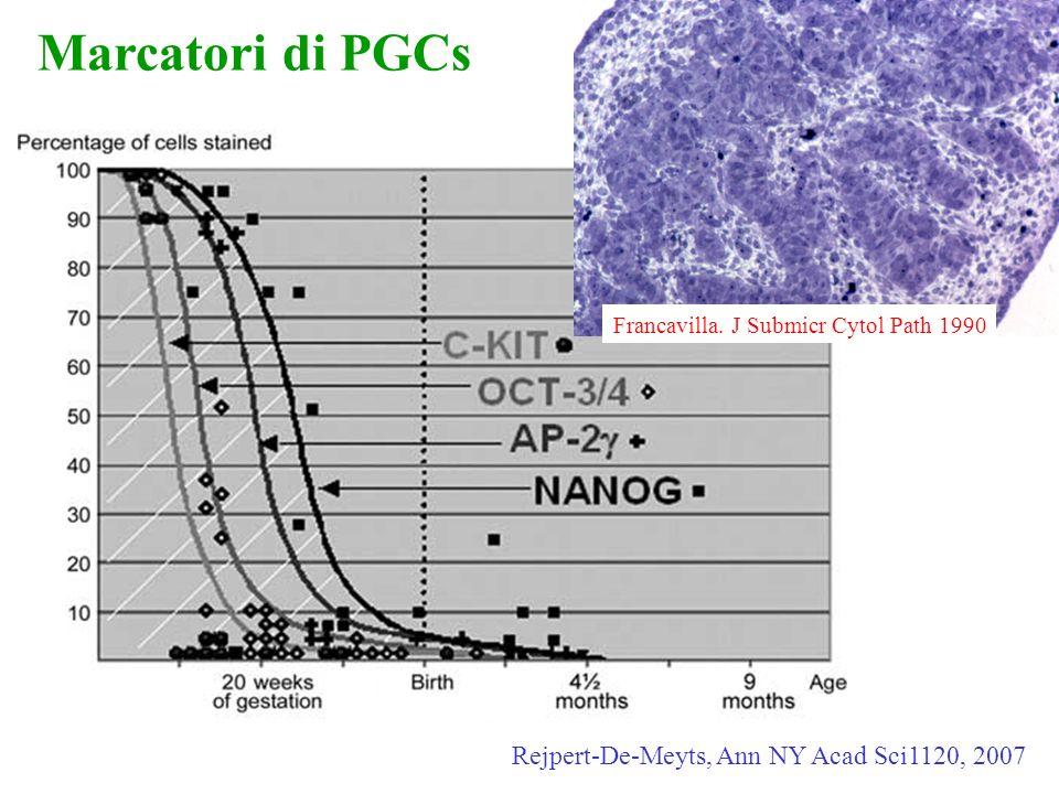Marcatori di PGCs Rejpert-De-Meyts, Ann NY Acad Sci1120, 2007