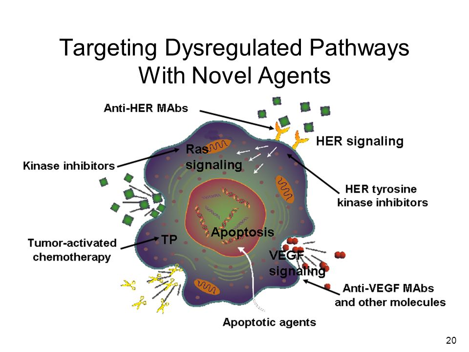 Targeting Dysregulated Pathways With Novel Agents