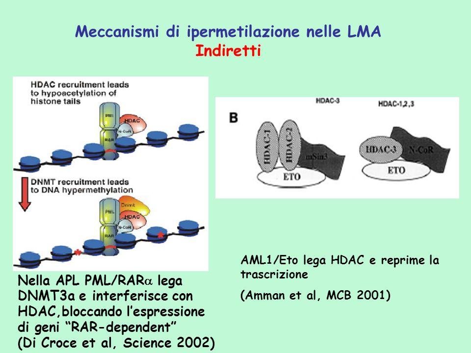Meccanismi di ipermetilazione nelle LMA