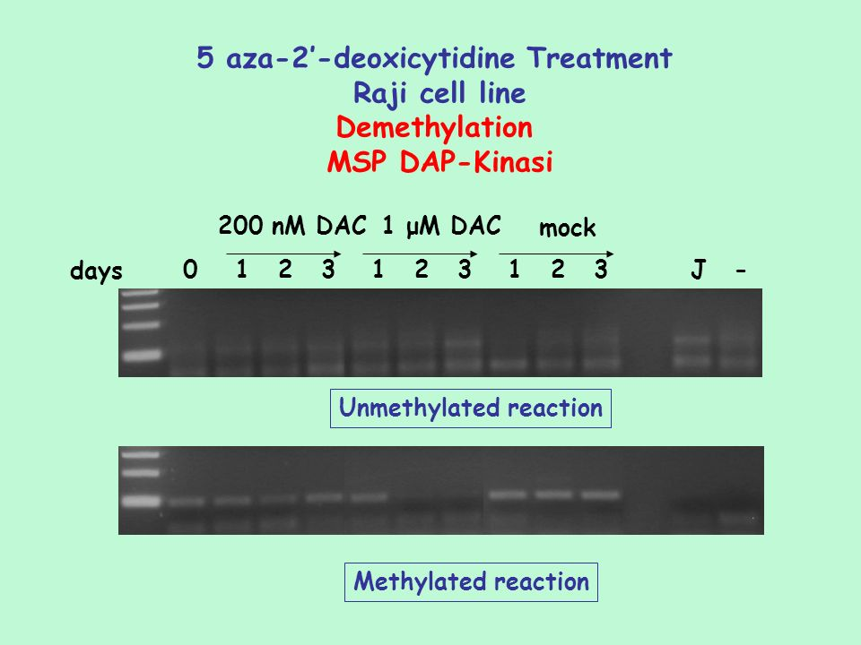 5 aza-2'-deoxicytidine Treatment