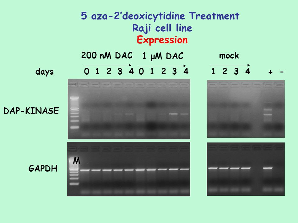 5 aza-2'deoxicytidine Treatment