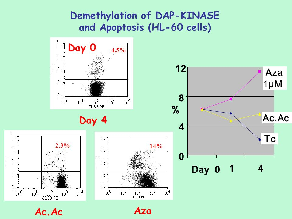 Demethylation of DAP-KINASE and Apoptosis (HL-60 cells)