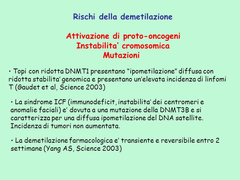 Rischi della demetilazione Attivazione di proto-oncogeni