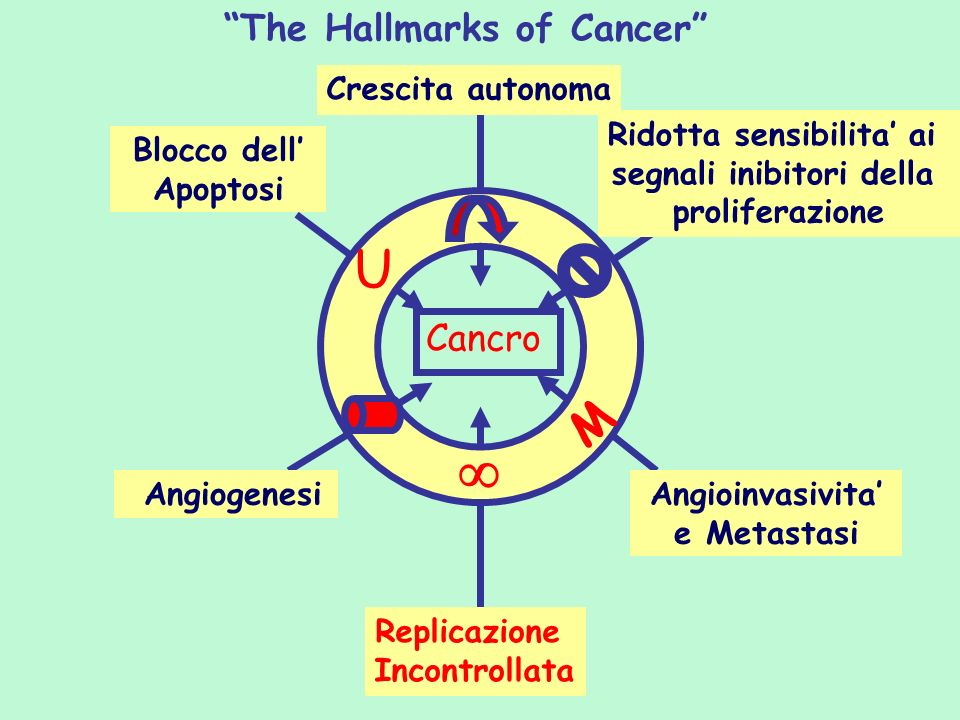  U M The Hallmarks of Cancer Cancro Crescita autonoma