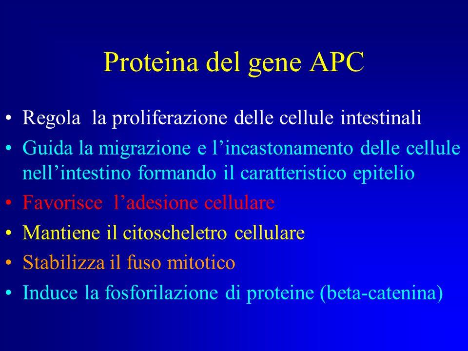 Proteina del gene APC Regola la proliferazione delle cellule intestinali.