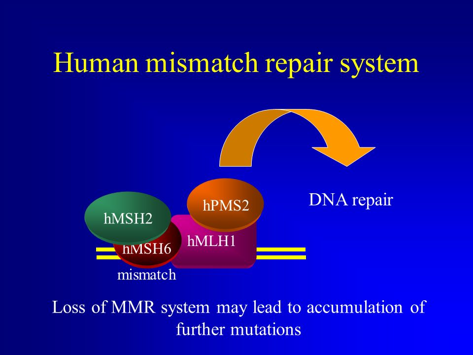 Human mismatch repair system