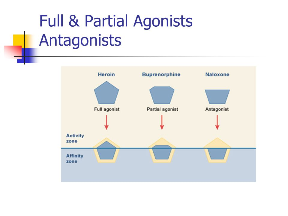 Full & Partial Agonists Antagonists