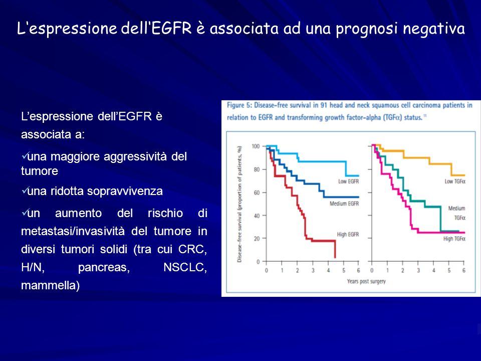 L'espressione dell'EGFR è associata ad una prognosi negativa
