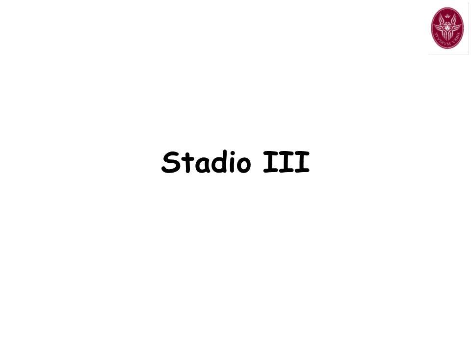 Stadio III