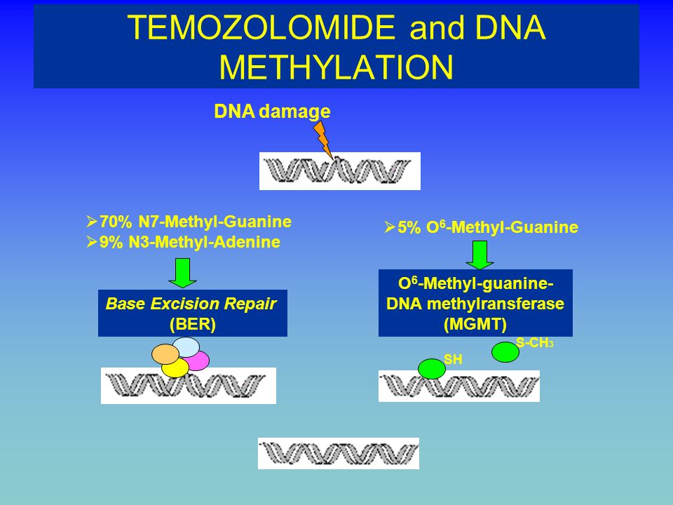 TEMOZOLOMIDE and DNA METHYLATION