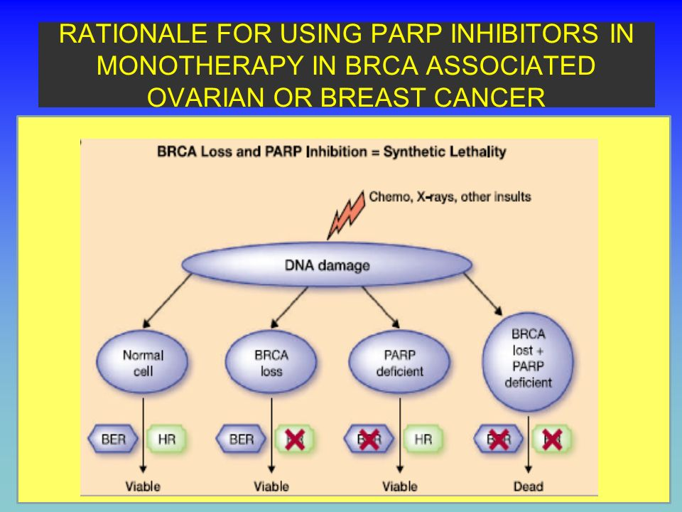 Lack of PARP-mediated BER is a synthetic lethal partner of complete BRCA1 or BRCA2 functional loss