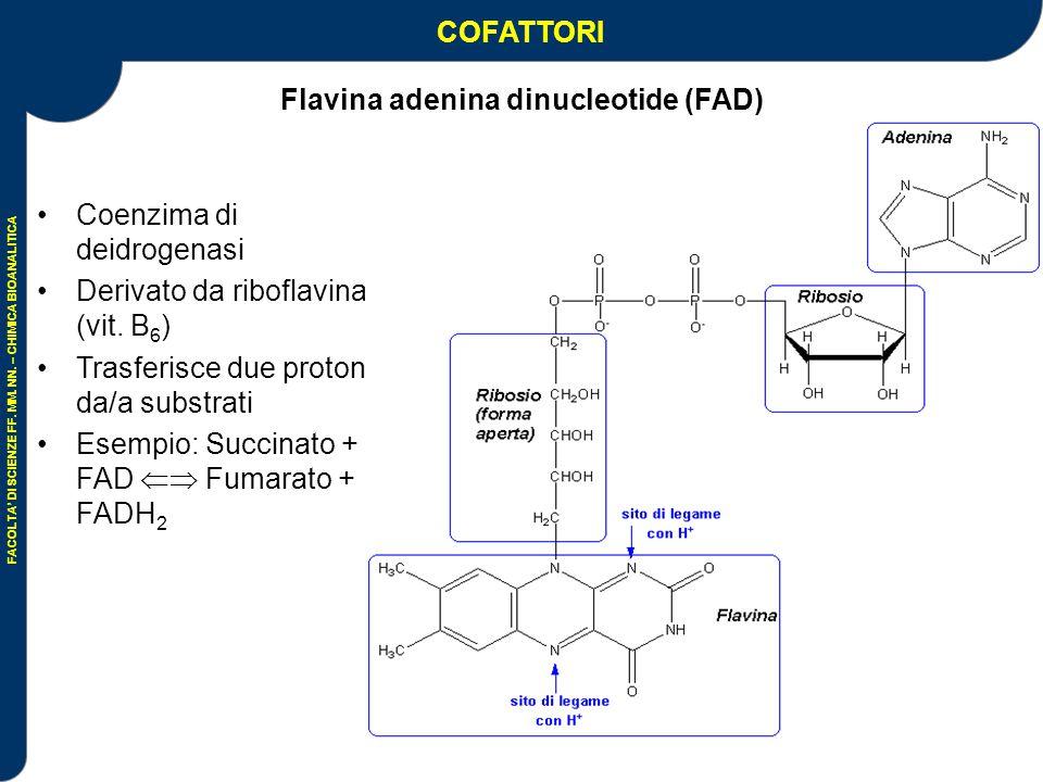 Flavina adenina dinucleotide (FAD)