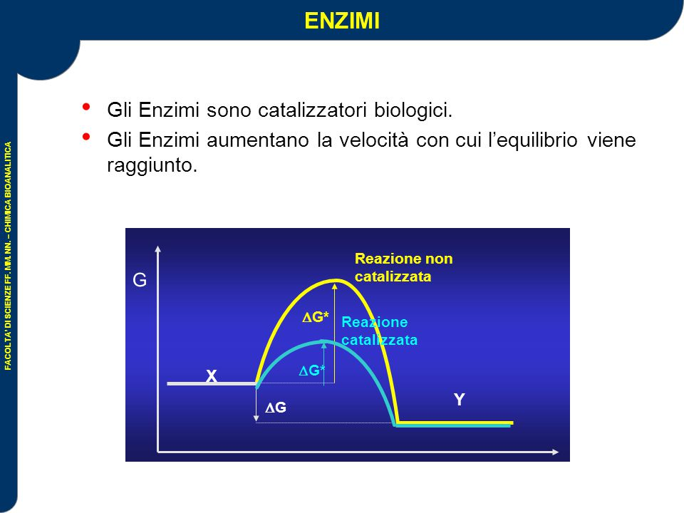 ENZIMI Gli Enzimi sono catalizzatori biologici.
