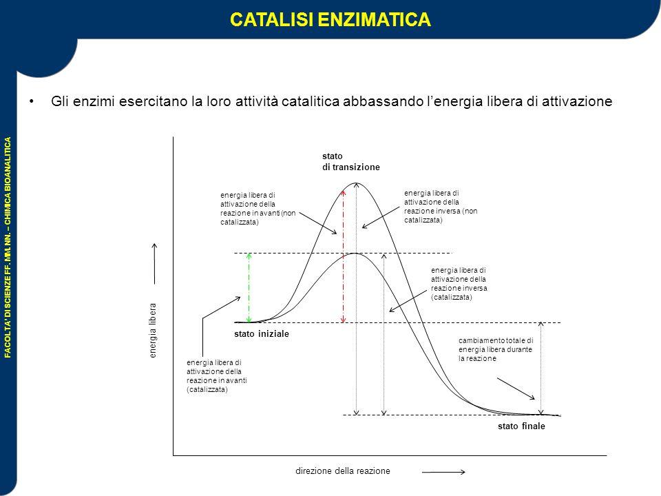 CATALISI ENZIMATICA Gli enzimi esercitano la loro attività catalitica abbassando l'energia libera di attivazione.