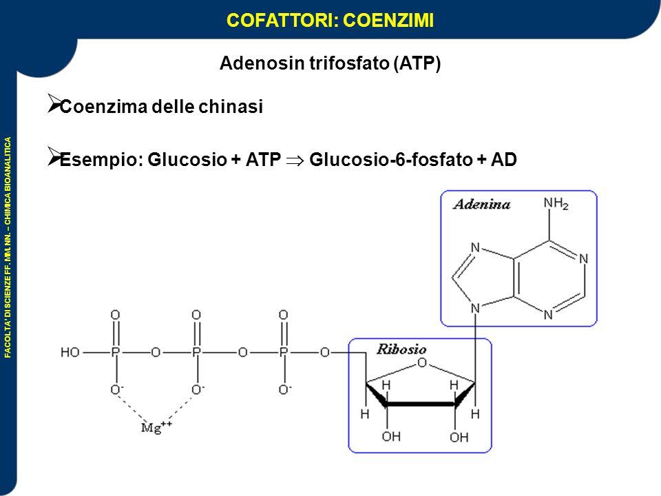 Adenosin trifosfato (ATP)