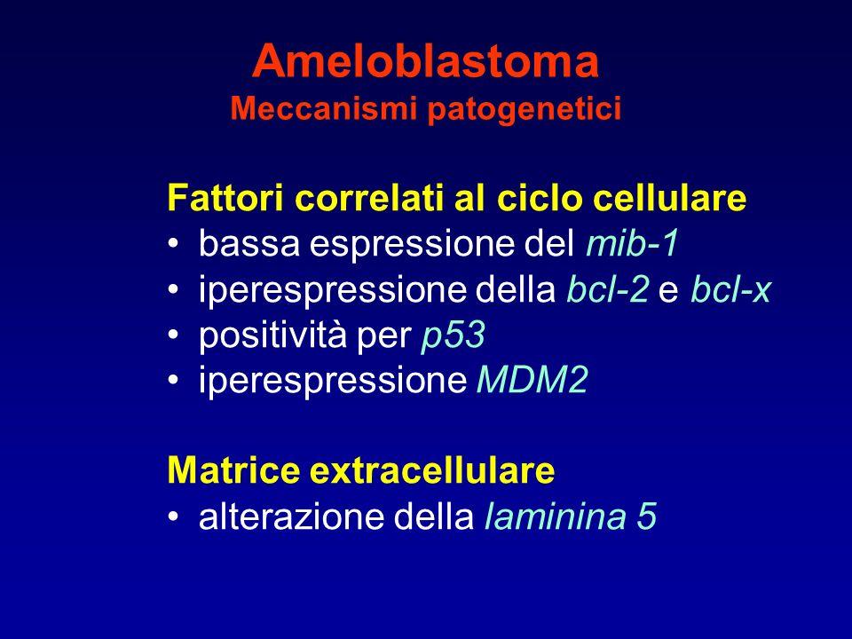 Ameloblastoma Meccanismi patogenetici