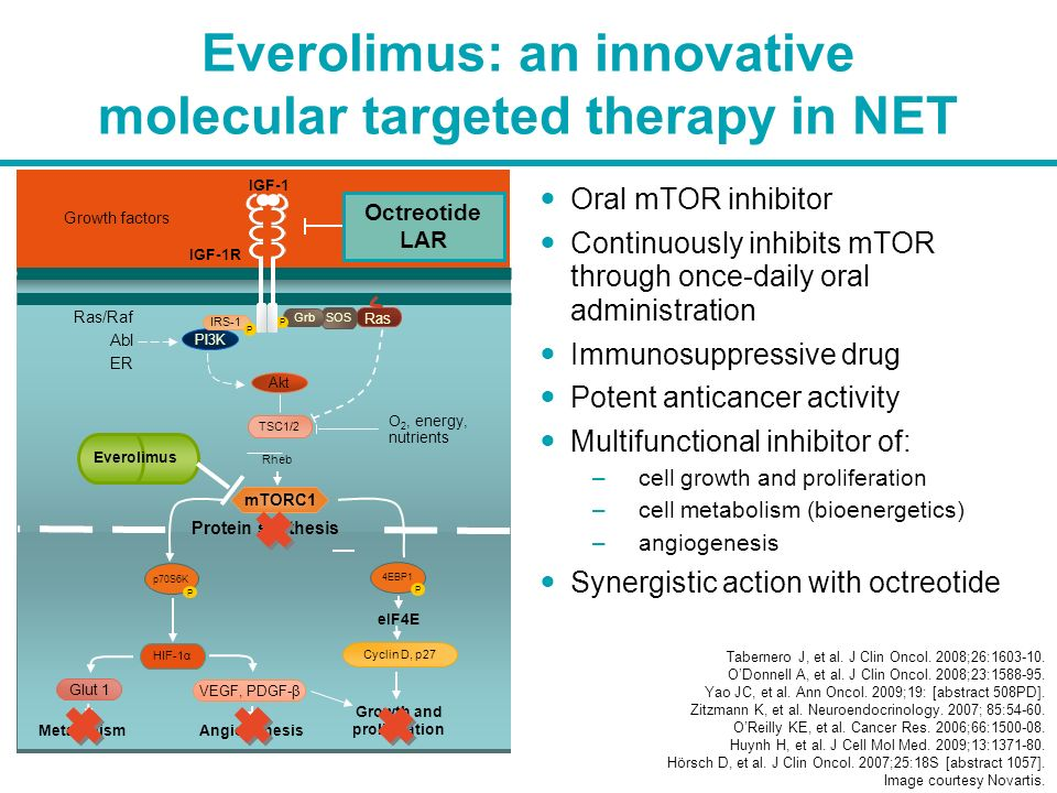 Everolimus: an innovative molecular targeted therapy in NET