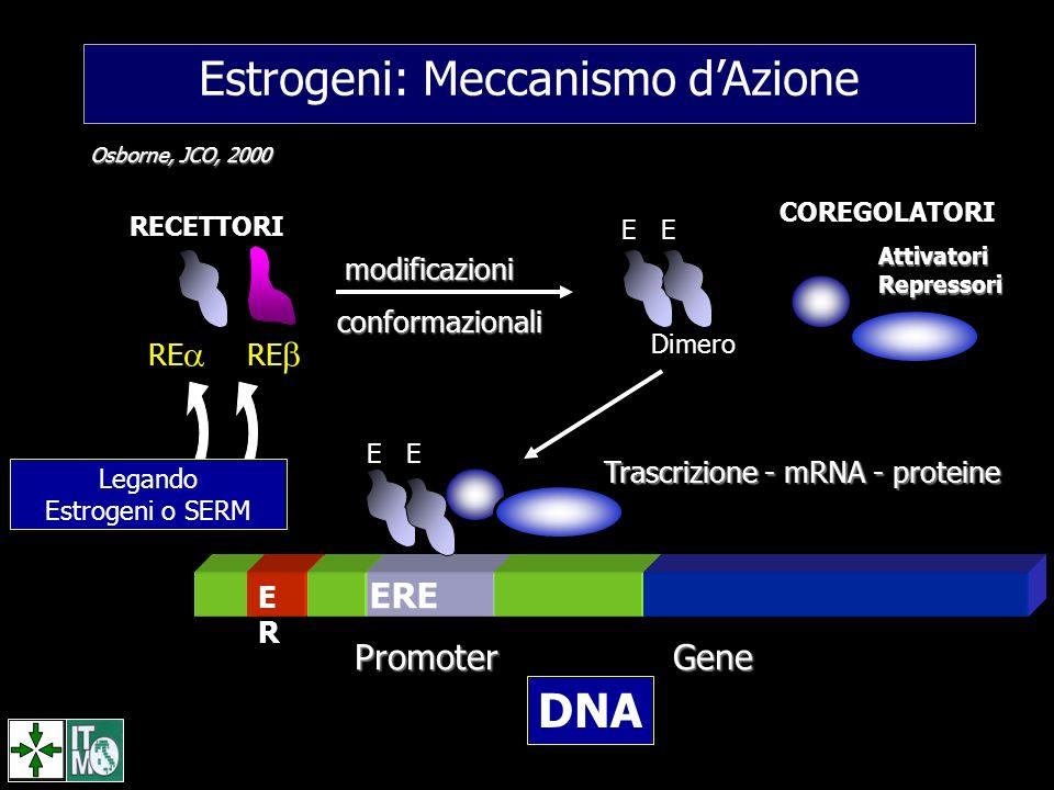 Estrogeni: Meccanismo d'Azione
