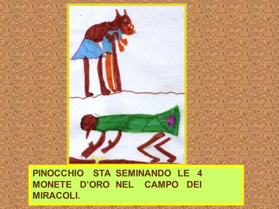 PINOCCHIO STA SEMINANDO LE 4 MONETE D'ORO NEL CAMPO DEI MIRACOLI.