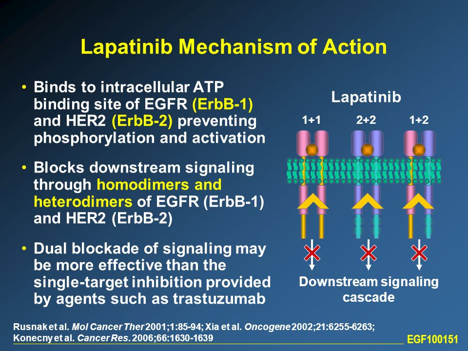 Lapatinib Mechanism of Action