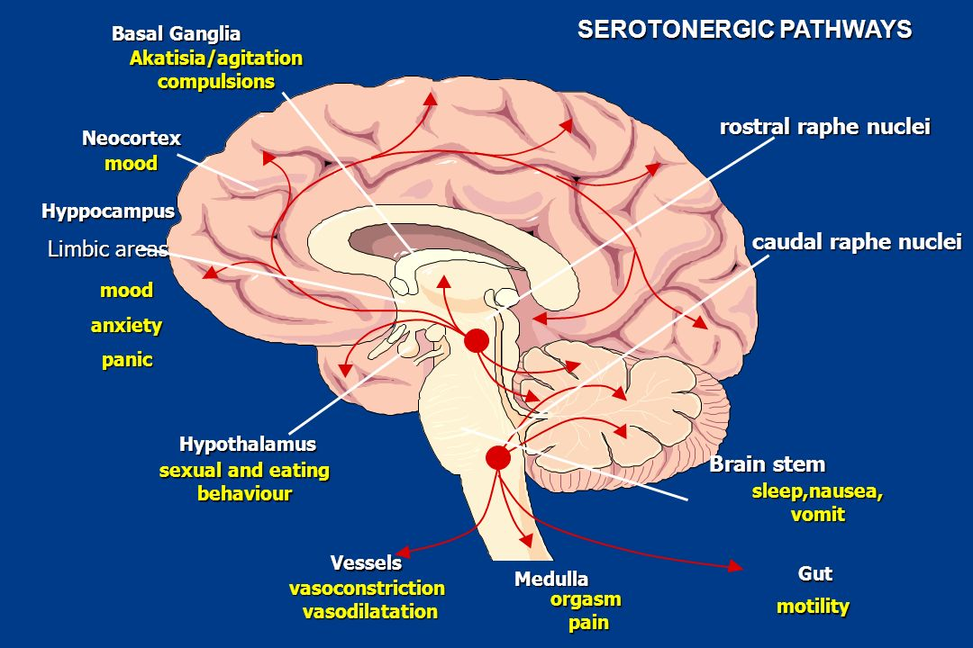 SEROTONERGIC PATHWAYS