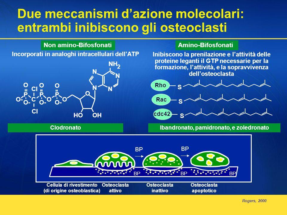 Due meccanismi d'azione molecolari: entrambi inibiscono gli osteoclasti