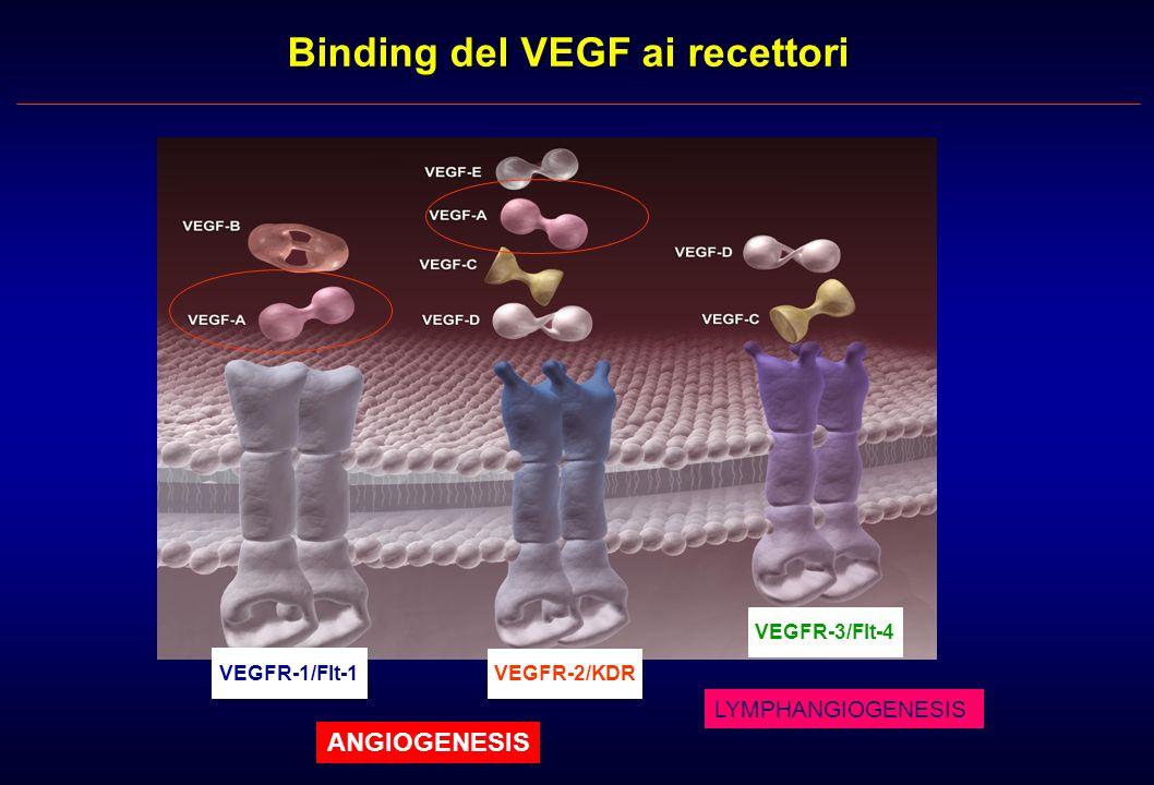 Binding del VEGF ai recettori