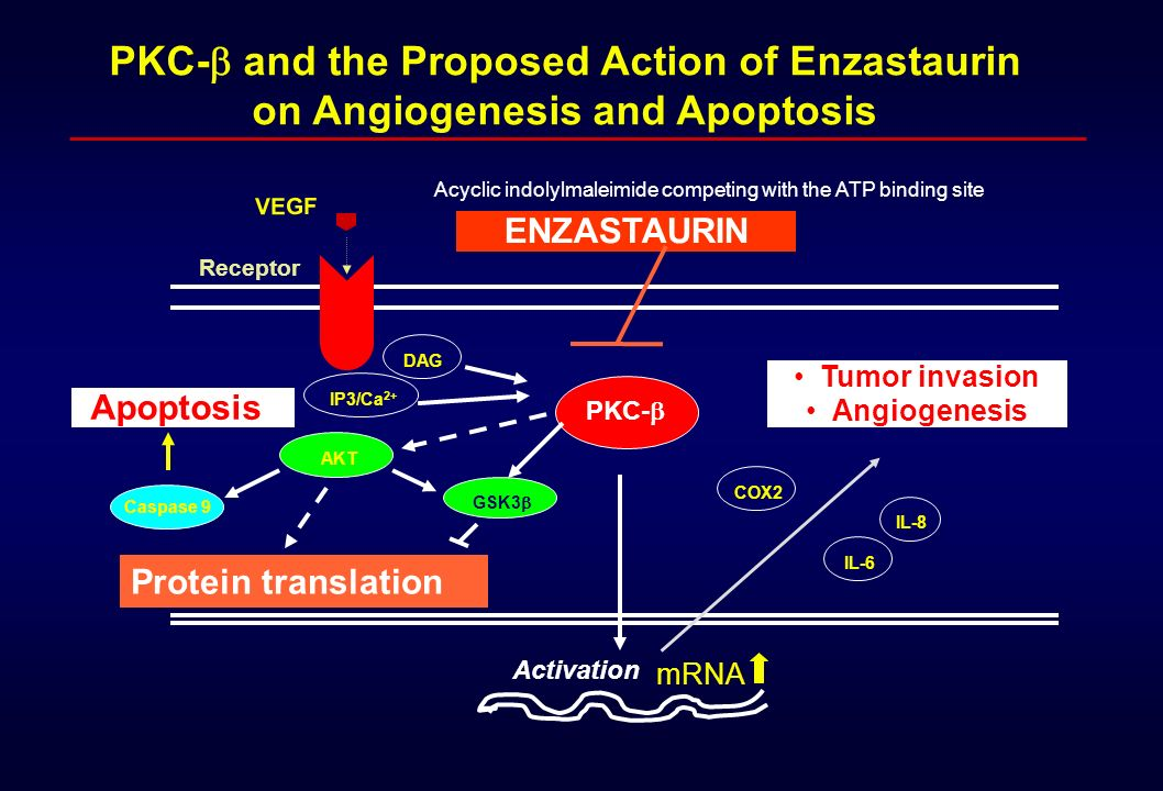 PKC-b and the Proposed Action of Enzastaurin on Angiogenesis and Apoptosis