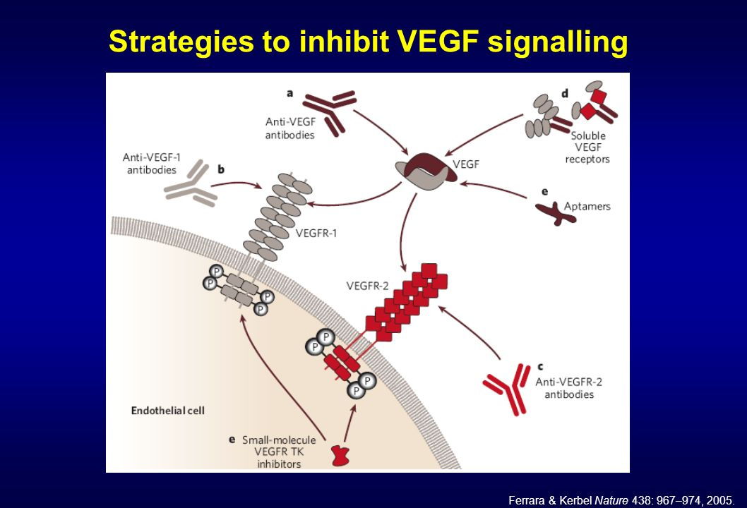 Strategies to inhibit VEGF signalling