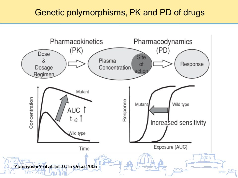 Genetic polymorphisms, PK and PD of drugs