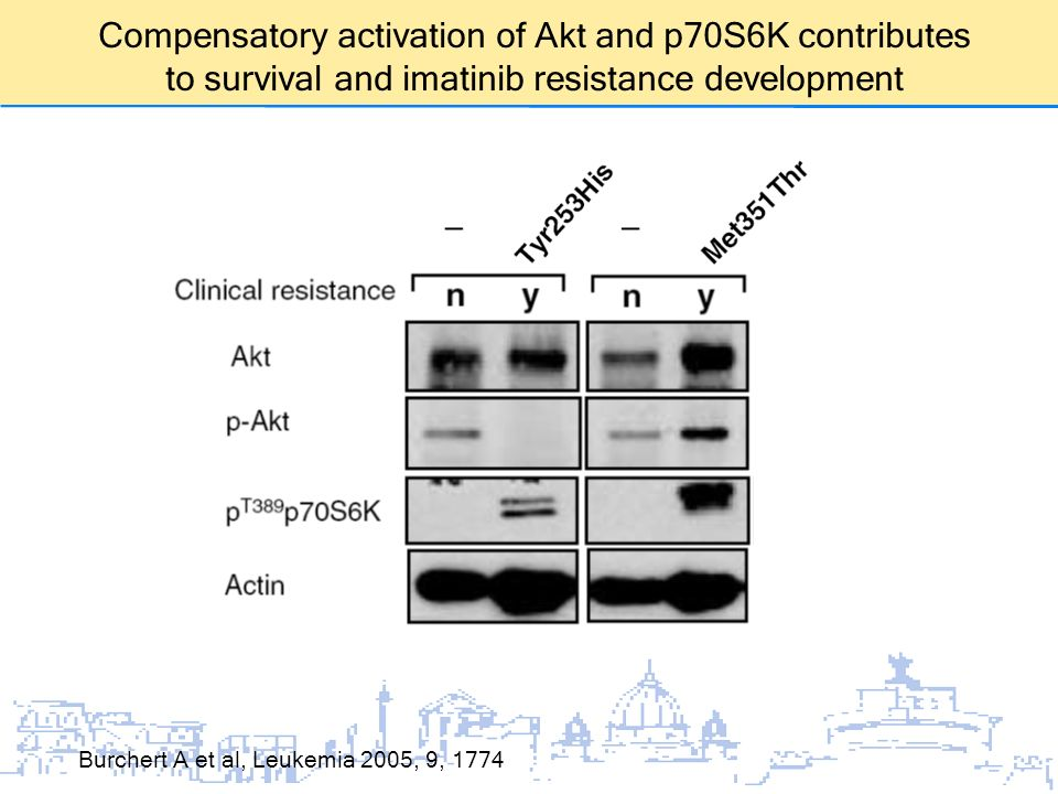 Compensatory activation of Akt and p70S6K contributes