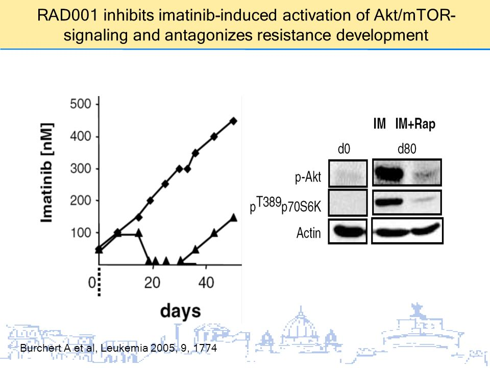 RAD001 inhibits imatinib-induced activation of Akt/mTOR-signaling and antagonizes resistance development
