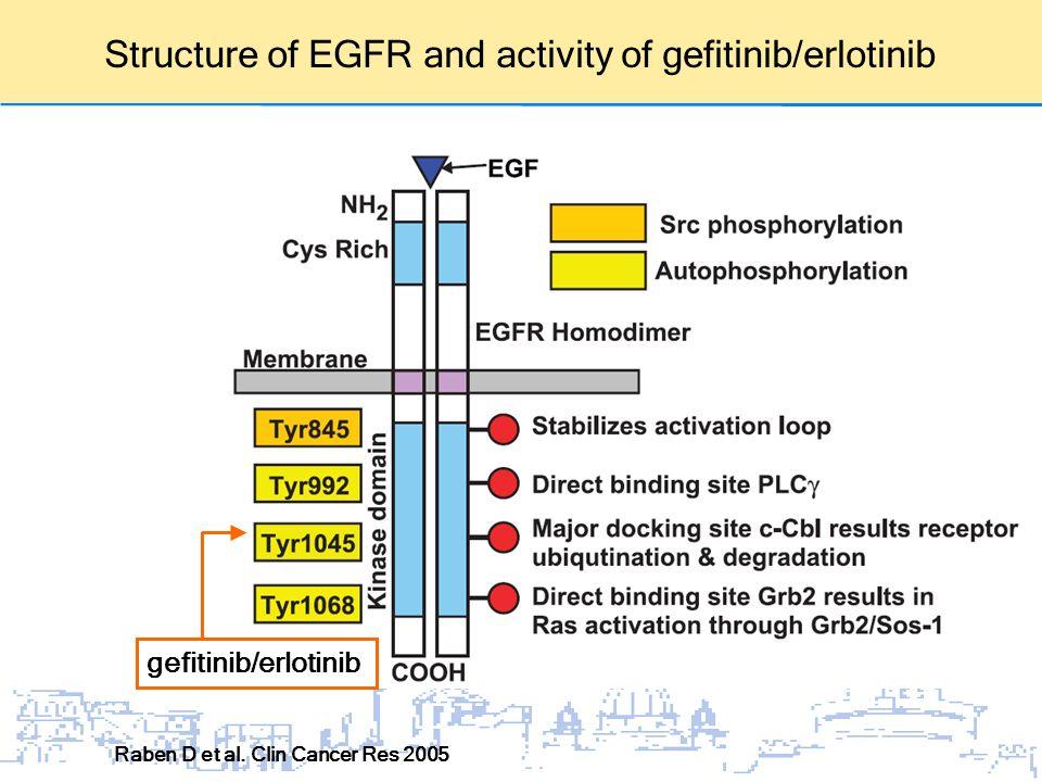 Structure of EGFR and activity of gefitinib/erlotinib