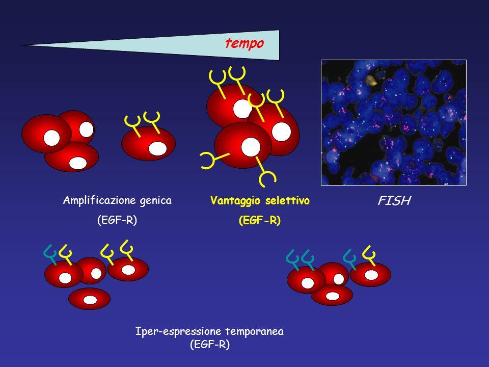 tempo FISH Amplificazione genica (EGF-R) Vantaggio selettivo (EGF-R)
