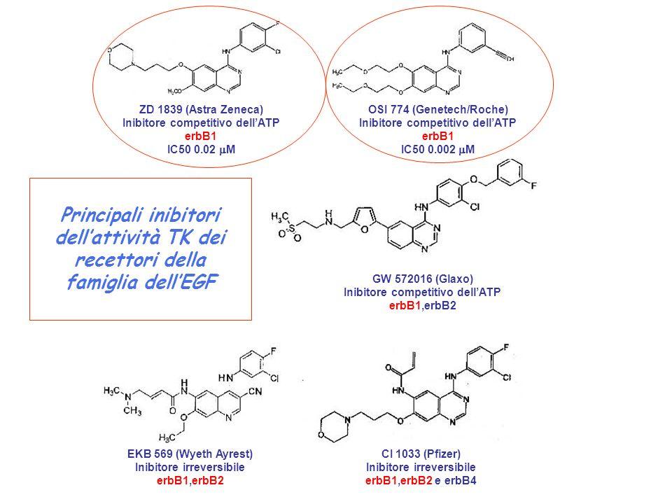 ZD 1839 (Astra Zeneca) Inibitore competitivo dell'ATP. erbB1. IC50 0.02 mM. OSI 774 (Genetech/Roche)