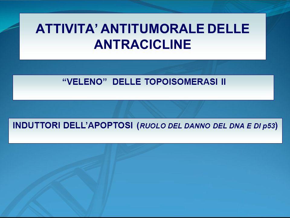 ATTIVITA' ANTITUMORALE DELLE ANTRACICLINE
