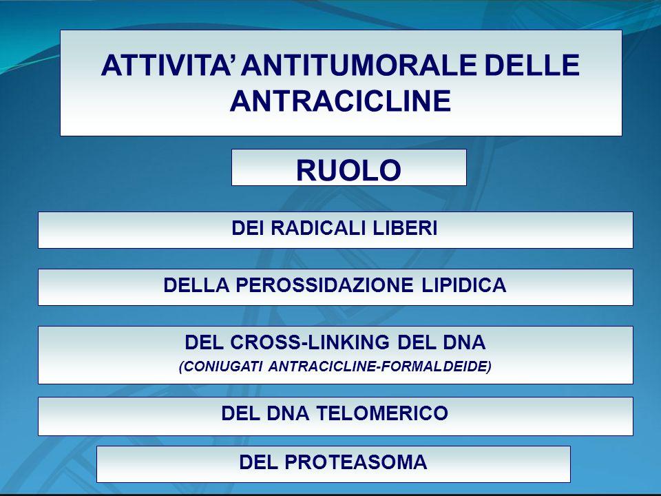ATTIVITA' ANTITUMORALE DELLE ANTRACICLINE RUOLO