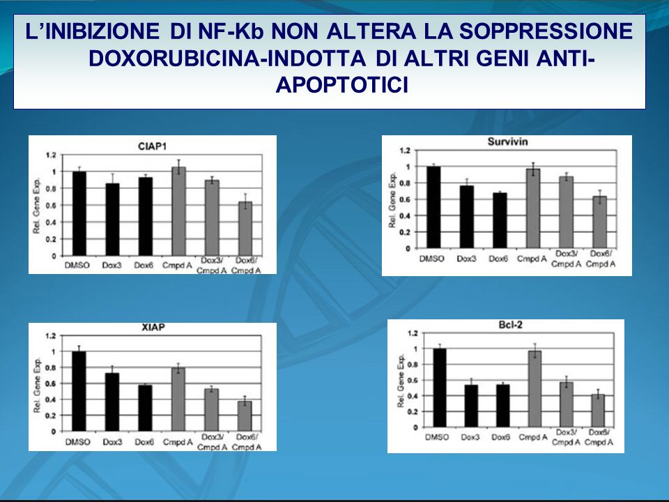 L'INIBIZIONE DI NF-Kb NON ALTERA LA SOPPRESSIONE DOXORUBICINA-INDOTTA DI ALTRI GENI ANTI-APOPTOTICI